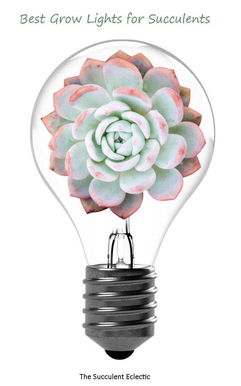 Grow Lights For Succulents Grow Lights Succulents Vegetable Garden For Beginners