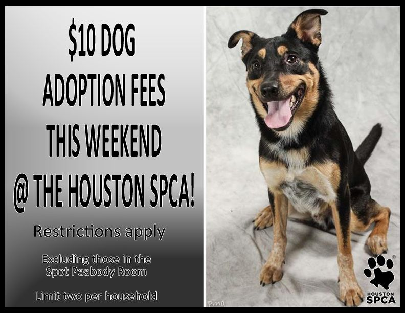 Dogs Excluding Those In The Spot Peabody Room Limit Two Per Household At The Houston Spca Will Be Available To Approv Adoption Options Dog Adoption Adoption
