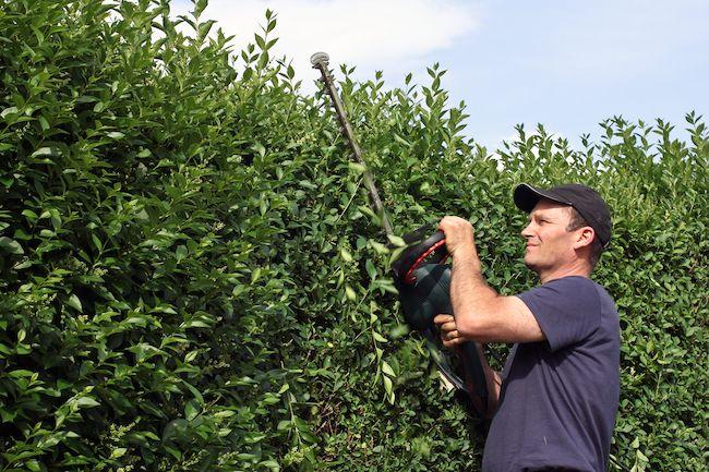Radio Radical Hedge Pruning Hedges Living Fence Living