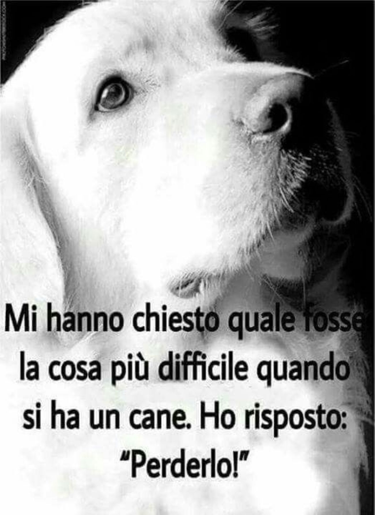 Frasi Per Cani.Frasi Amore Per I Cani 2 Dogs Dog Quotes Dog Lovers