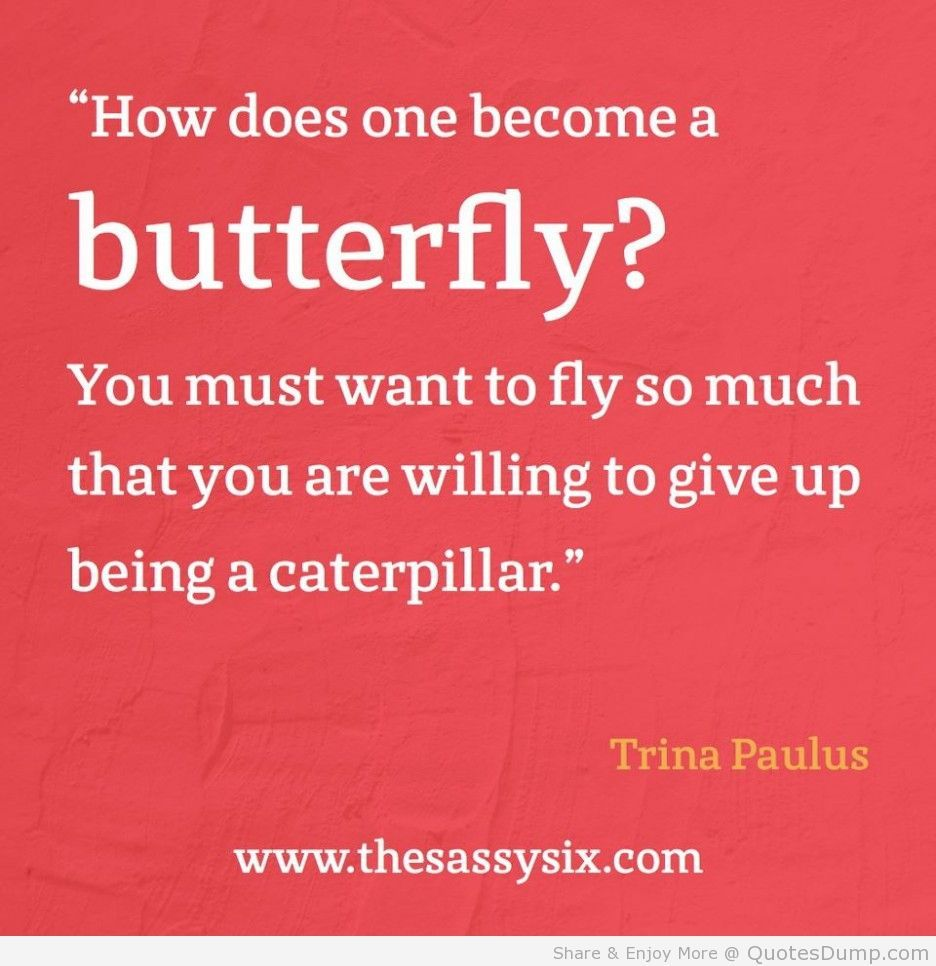 Quotes Daily Life Animal Quotes Trina Paulus Quotes About Butterfly In Our Daily
