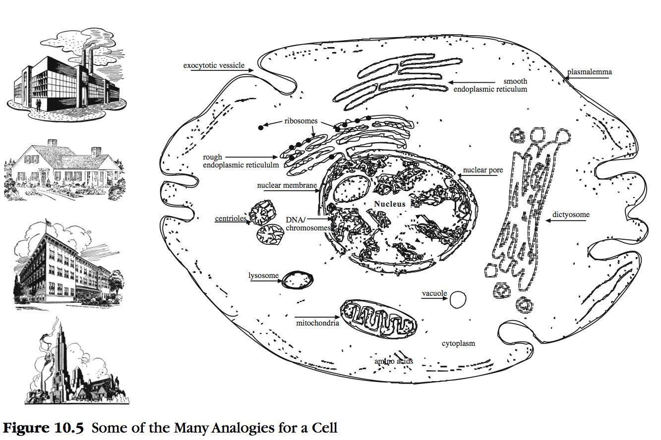 Factory Cellgogy