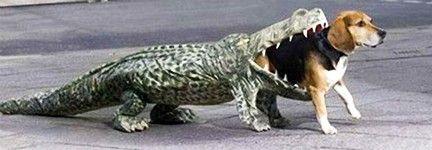 Funny Halloween costume : crocodile dog costume  - Germanpascual.Com