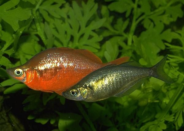 Pin On Rocking Rainbowfish And Bottom Buddies