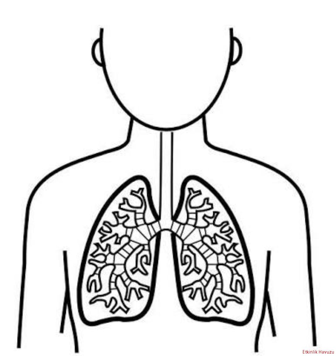 Akciğer Boyama Sayfası Ile Ilgili Görsel Sonucu Plandakiler