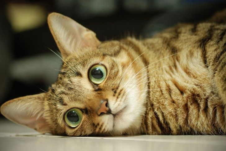 Cat, Close-up, Eyes, Face wallpapers