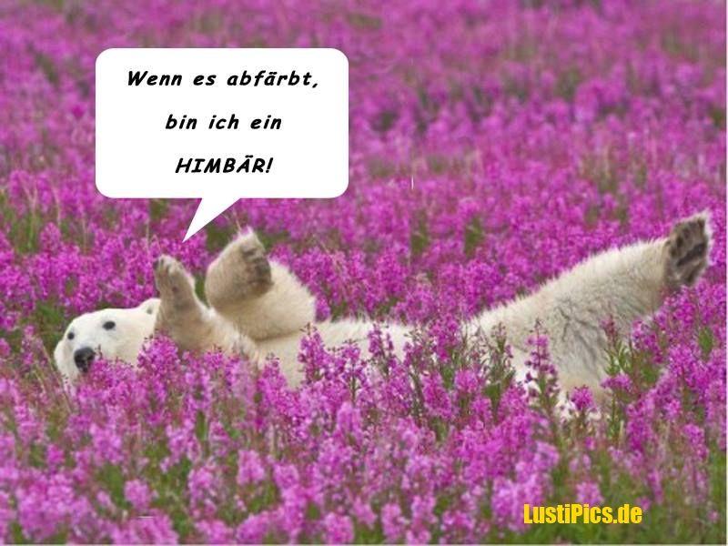 Lustige tierbilder google suche lustig pinterest - Lustige bilder google ...