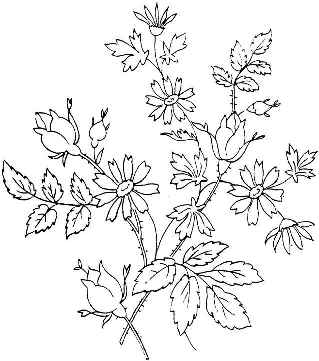 Flower Coloring Page   __pattern- stencil- coloring   Pinterest   Blumen