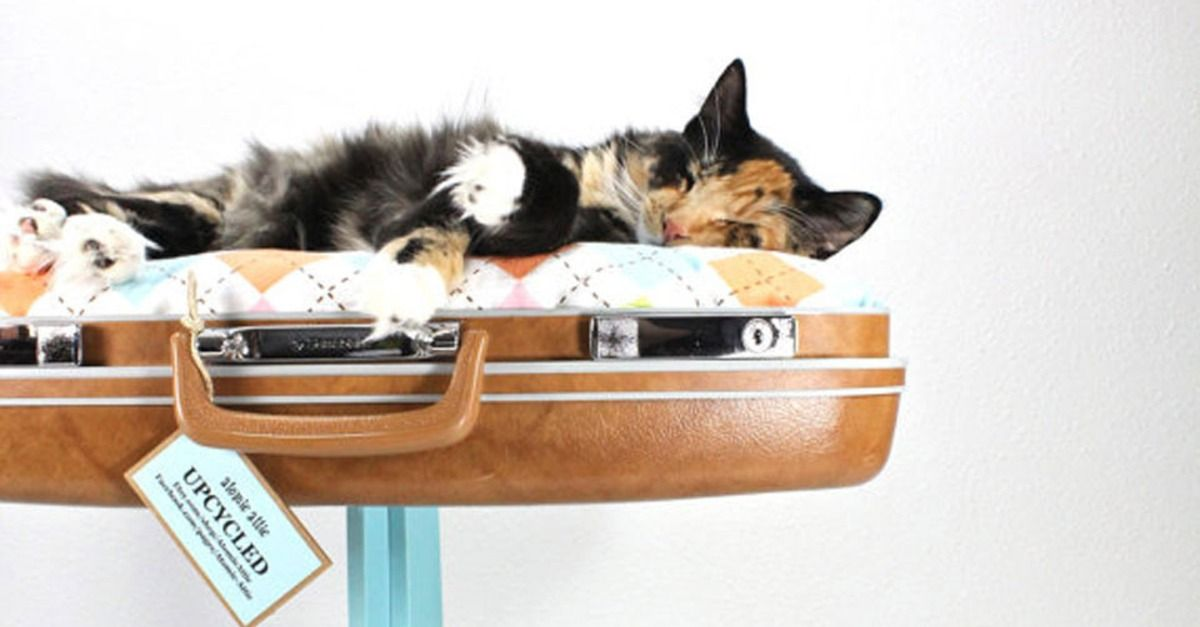14 PurrFect DIY Projects for Cat People Dogs diy