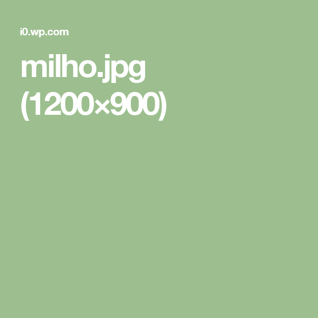 milho.jpg (1200×900)