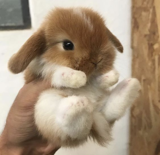 50 Adorable Baby Animals Will Surely Make Your Day Brighter | FallinPets #cutebabybunnies