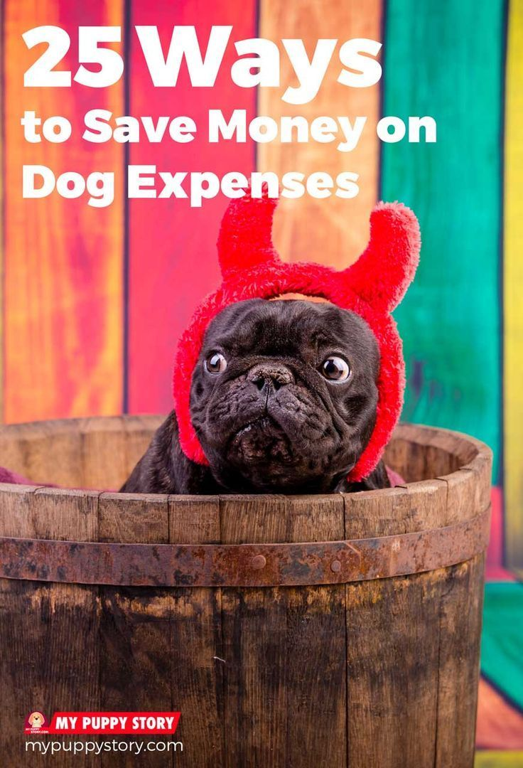 25 Ways to Save #Money on Dog #Expenses: The Ultimate Guide to Saving on #Dog Care, Food, #Grooming, Supplies, and #Health