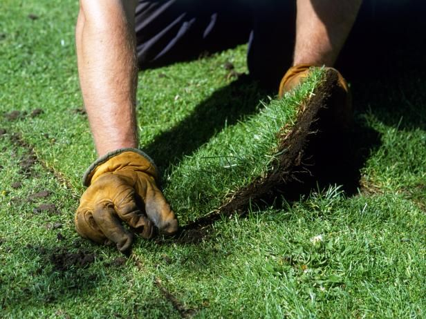 Caring For Your Lawn Year Round