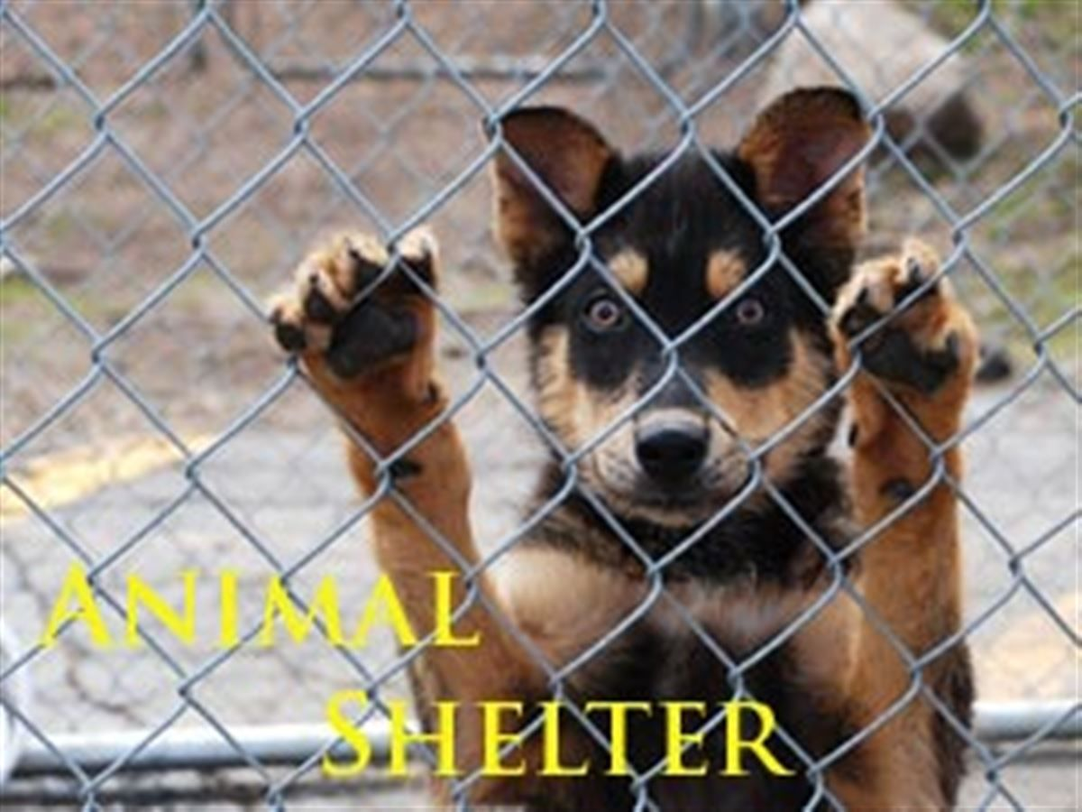 Local Group Encourages No Kill Animal Shelter Animal Shelter No Kill Animal Shelter Animals