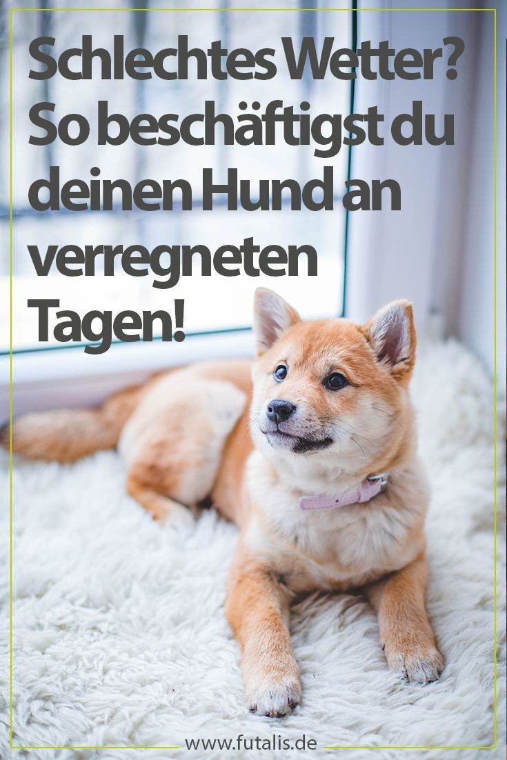 Dog games for at home: dogs are busy »futalis.de -  There are numerous ways #Dogs busy at home. This can be necessary for various reasons. We'll t - #Busy #CutePuppies #Dog #Dogs #ExoticPets #futalis #futalisde #games #home #PetAccessories #PetBeds #Petcare #PetClothes #PetDogs #PetPhotography #PetProducts #Pettips