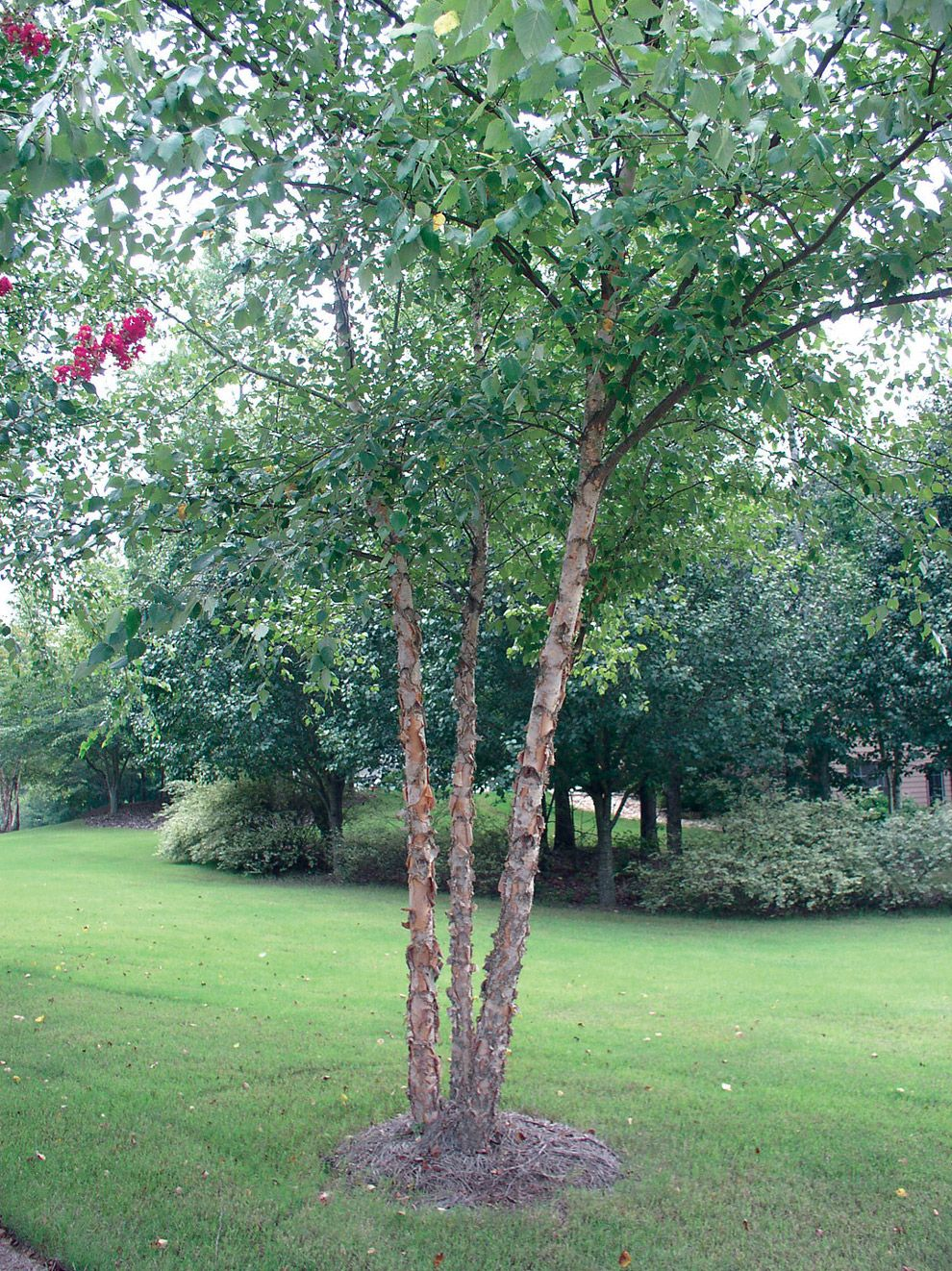 how to kill tree stumps with roundup