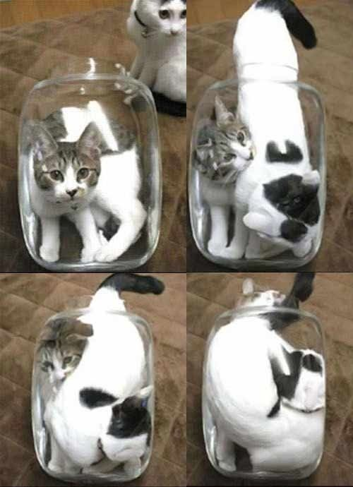 Cats Are Liquid Http Sulia Com Channel Cats F 406da673 Ae4a 4003 92c5 2a8bb47c61b2 Cats Pinterest