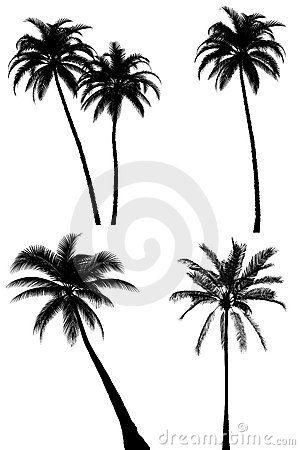 Palmeira Desenho Vetor Pesquisa Google Com Imagens