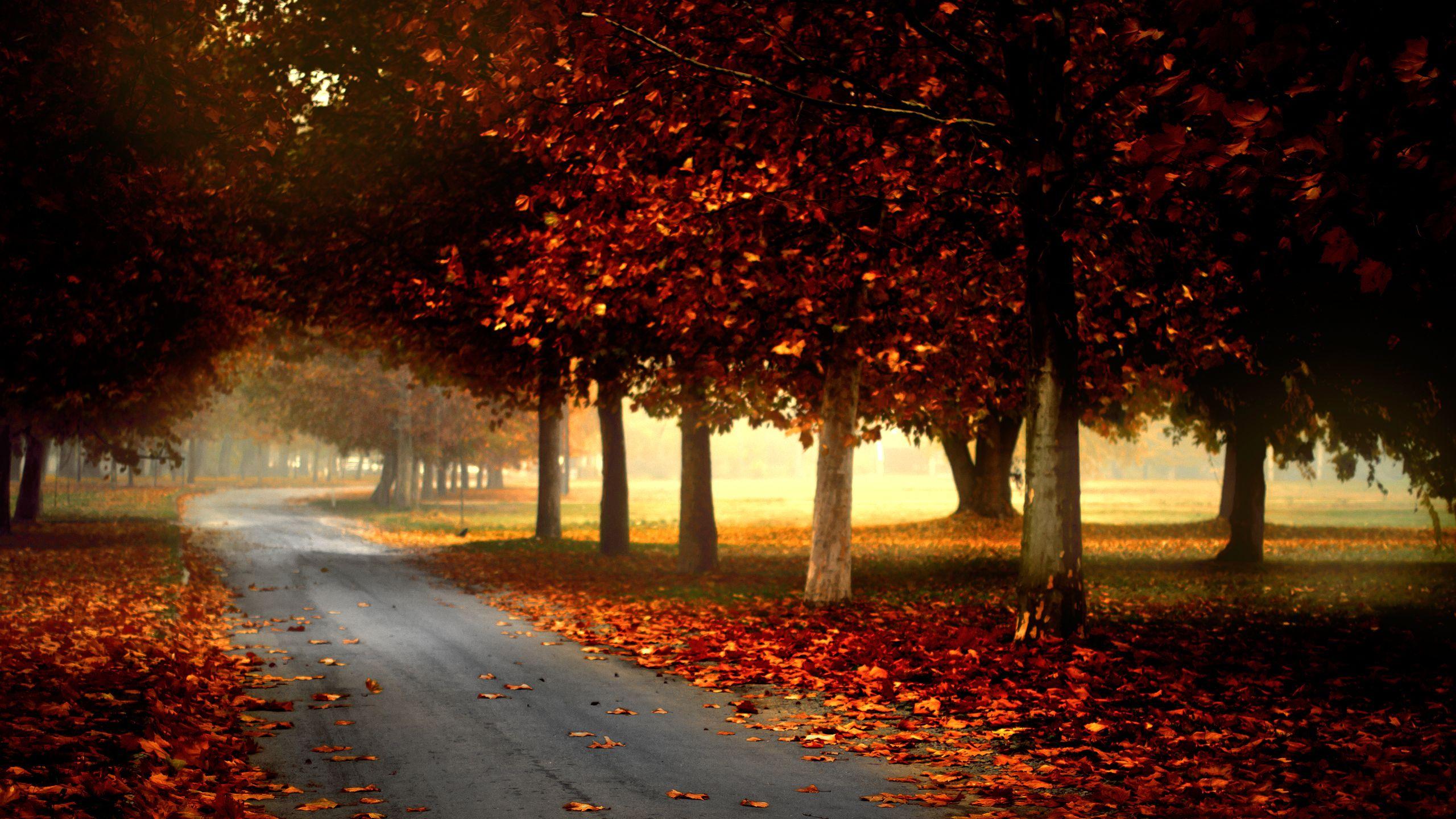 Country Road In Autumn Wallpaper Autumn Wallpaper Hd Landscape Wallpaper Forest Landscape