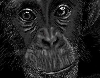 "Check out new work on my @Behance portfolio: ""Chimpan"" http://on.be.net/1JqRHEI"