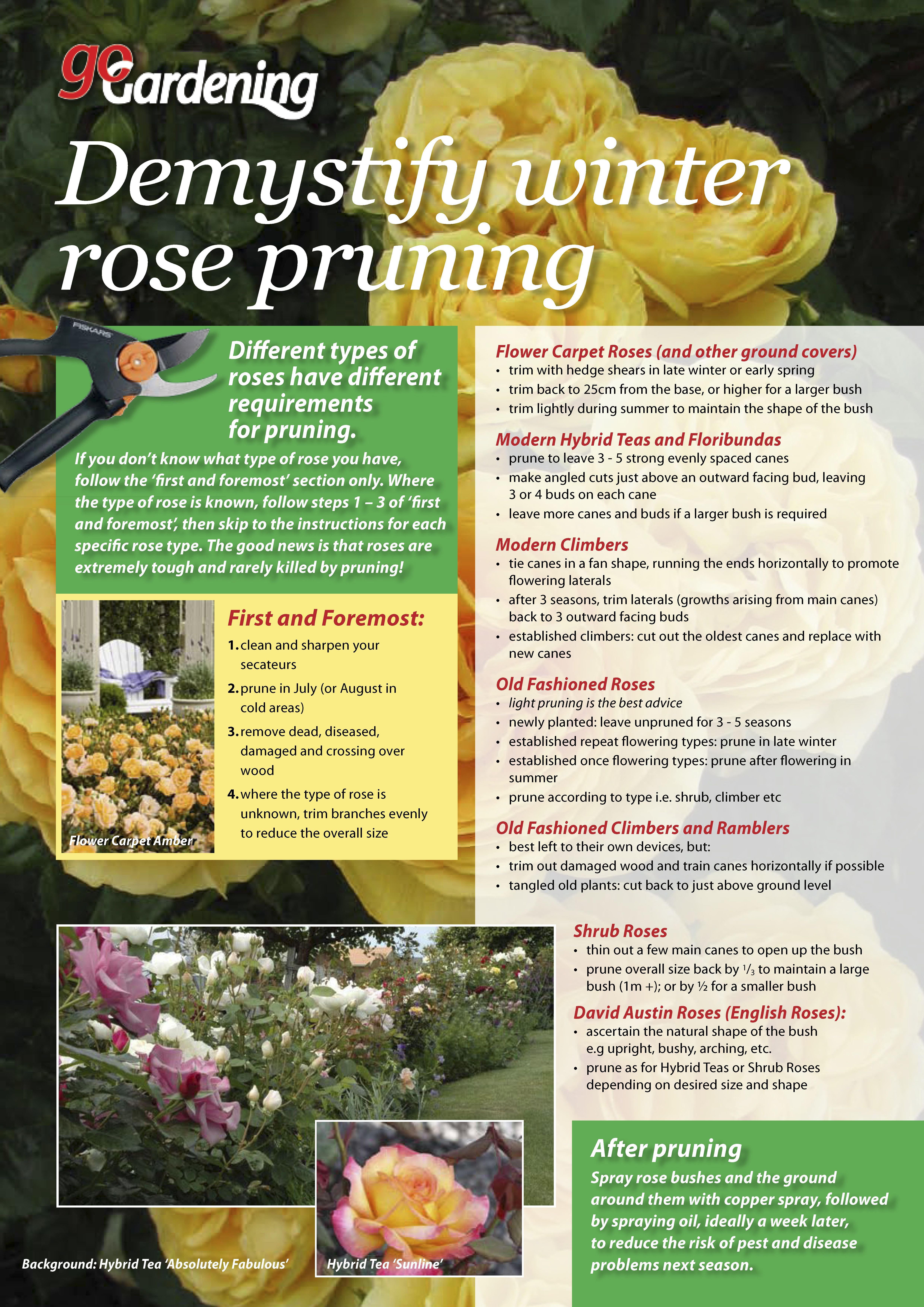 How To Prune Roses Ground Cover Roses Winter Rose Ground Cover