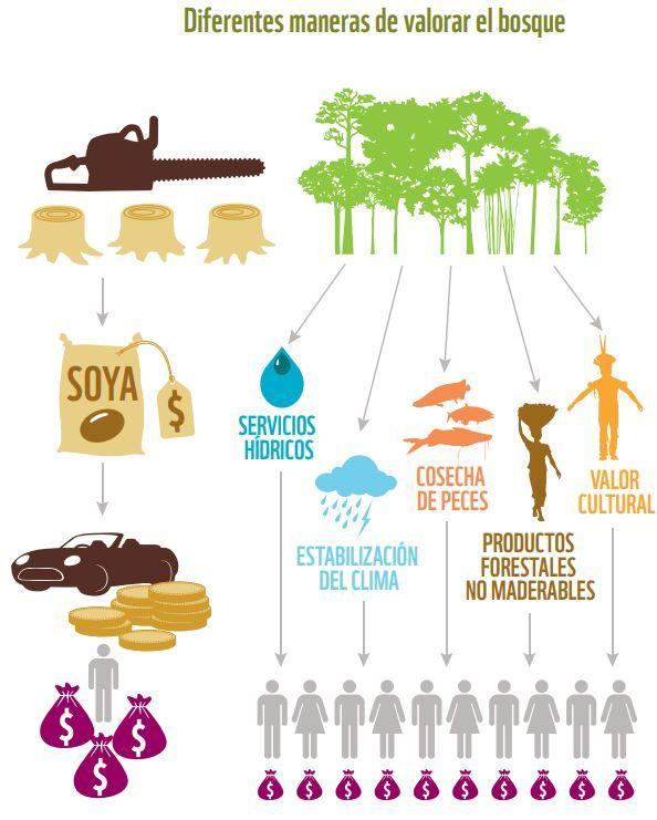 12 Spanish Amazonia Ideas Spanish Spanish Animals Colombian Culture