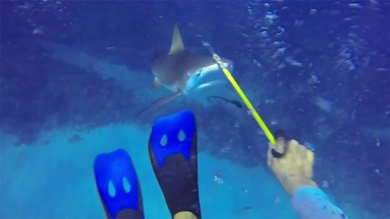 Video: Shark Attack On Diver - A Funny Video on KillSomeTime
