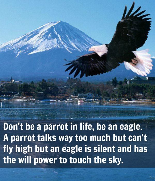 Good Morning America Eagles : Quotes of the day don t be a parrot in life an eagle