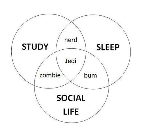 study  sleep  social life