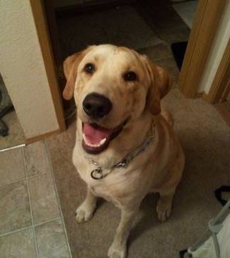 Please Help Soldier Asks For Help After He Returns From Deployment To Discover His Dog Was Given Away Dogheirs W Dogs Beloved Dog Labrador Retriever