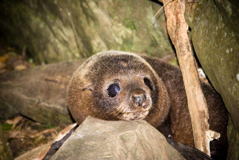 """Esta cascada escondida en Nueva Zelanda es una """"guardería"""" natural de crías de lobos marinos (Ohau, Kaikoura)"""