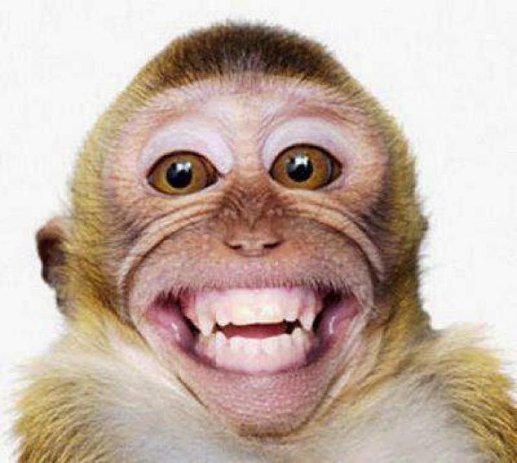 Jenis Monyet Yang Suka Gadis Belia Animal Photography Pinterest