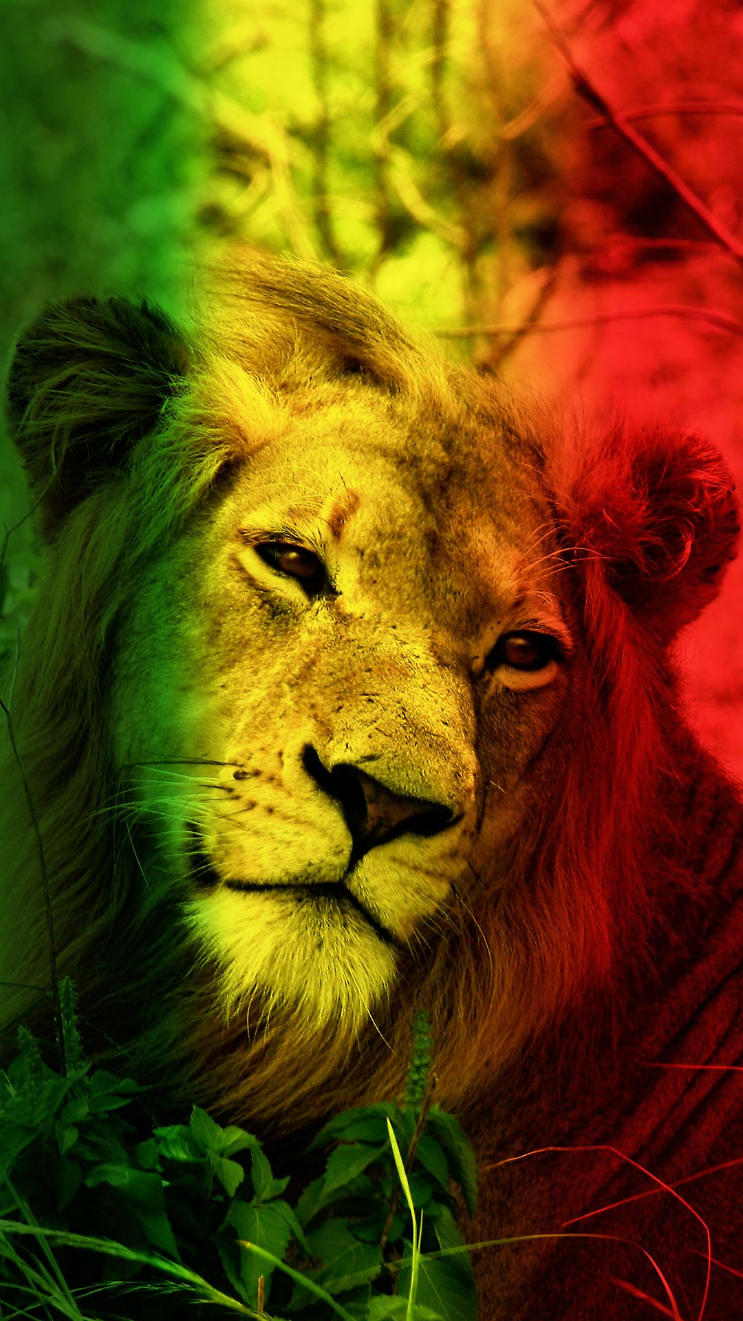 Lion Abstract Photo in 2020 Abstract photos, Cool