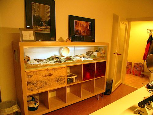 Diy Hamster Cage Made From An Ikea Expedit Bookcase