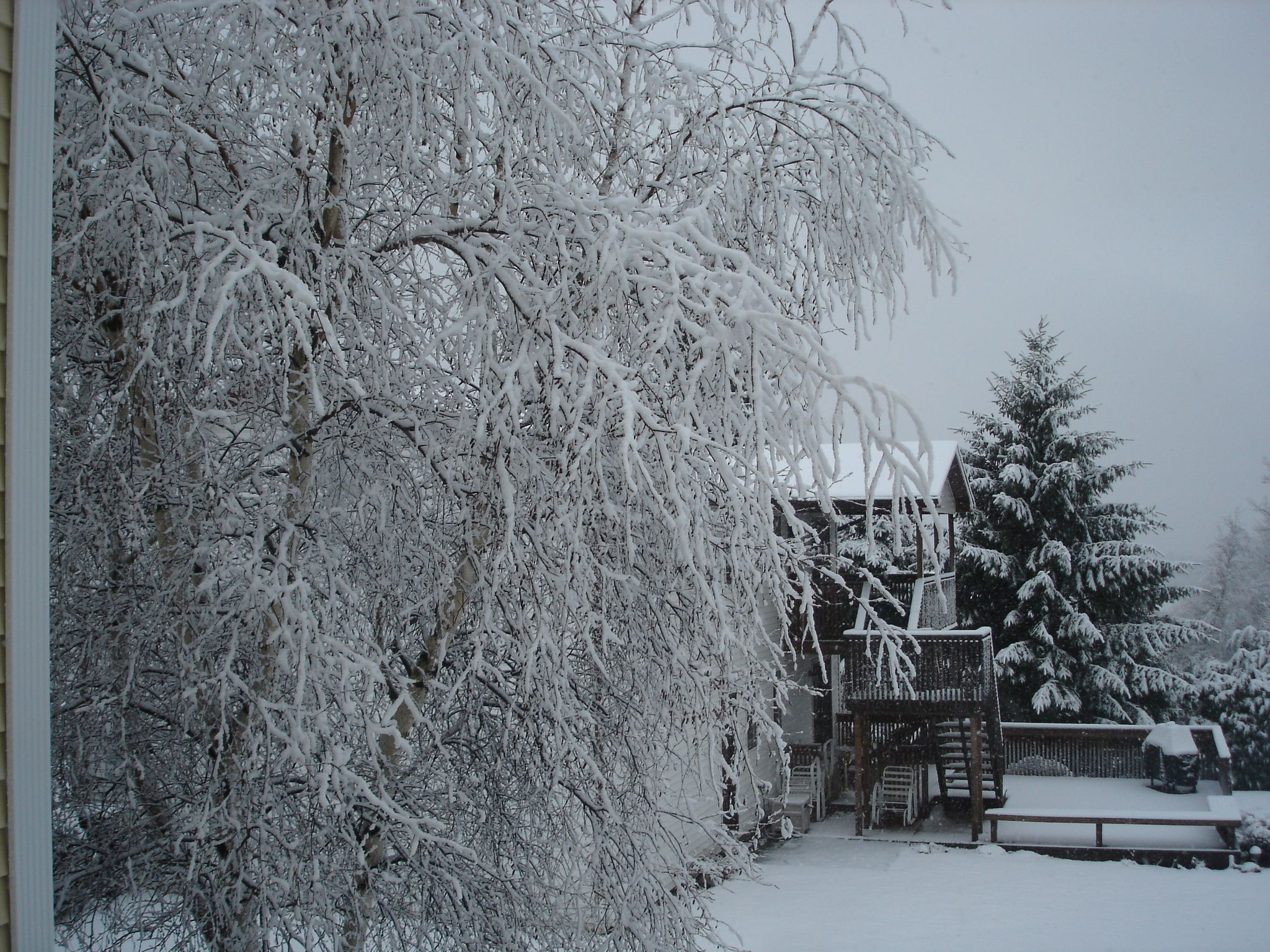 winterwonderland in our own backyard travel pinterest backyards