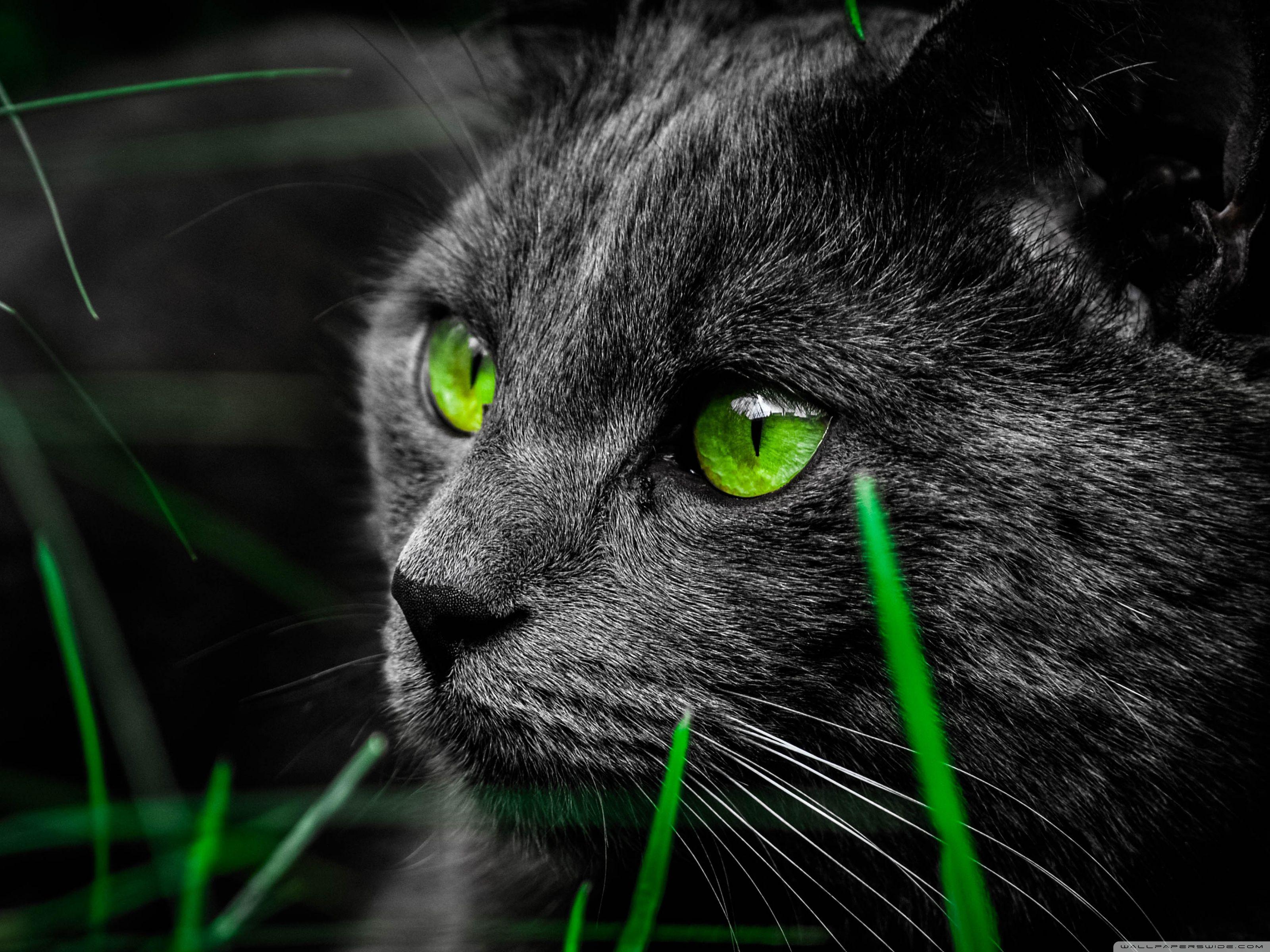 Cat Hd Desktop Wallpaper Widescreen High Definition Cat Wallpaper Cats Cat Pics