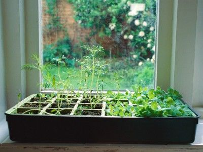 How To Grow An Indoor Herb Garden Indoor Herb Garden Herbs Indoors Outdoor Herb Garden