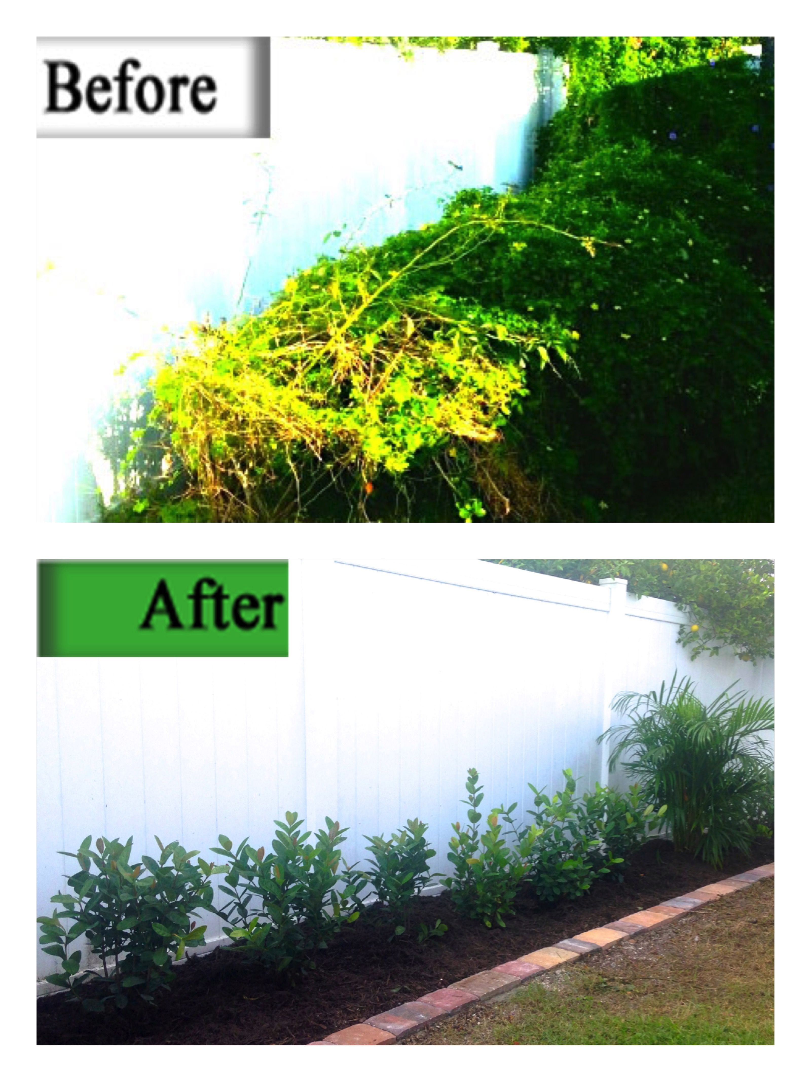 We replaced the overgrown plantings with paver edging, Ixora shrubs and Arica palms, and a fresh layer of mulch.
