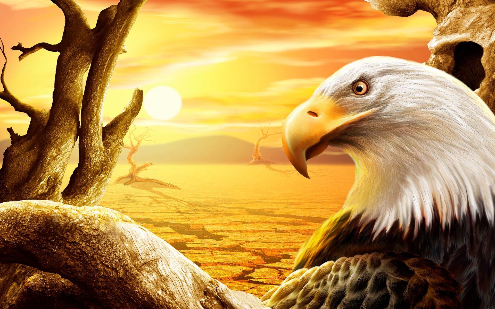 Eagle Wallpaper Images Pc Laptop Eagle Photos In Fhdkkc Eagle Wallpaper Eagle Images Bald Eagle