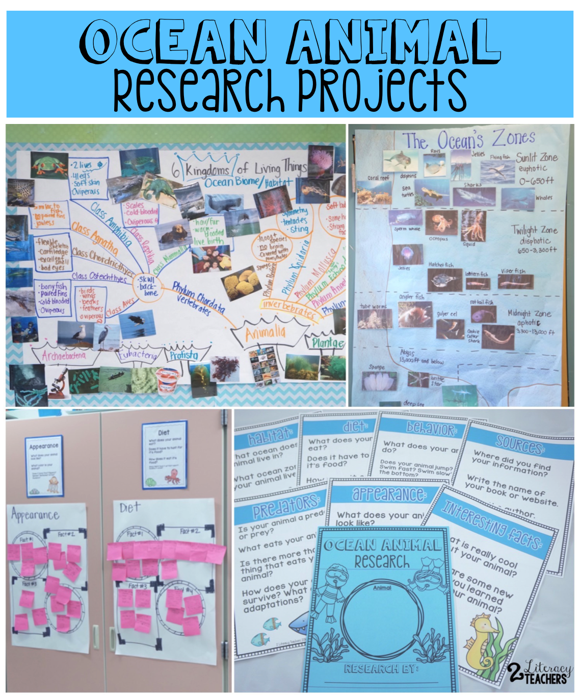 Ocean Animal Research Writing Projects The Resources Used In A Second Grade Classroom To Guide