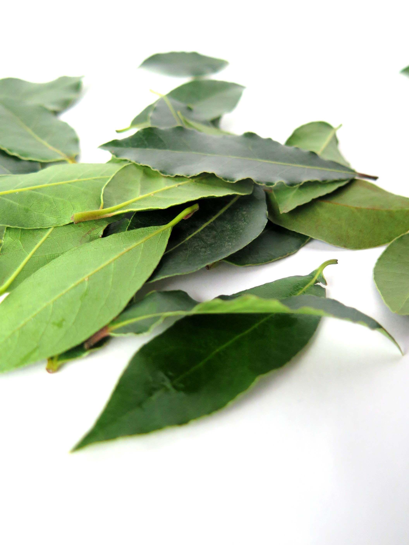 Bay Leaves Growing Herbs Indoors Easy Herbs To Grow 400 x 300