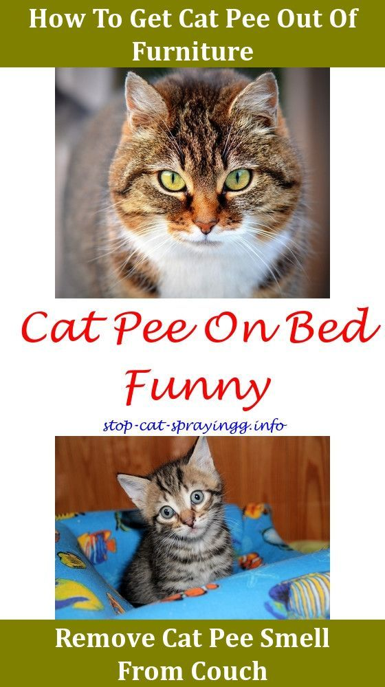 Strange Cat Urinating On Bed Cleaning Cat Pee Animals Diy Cat Alphanode Cool Chair Designs And Ideas Alphanodeonline