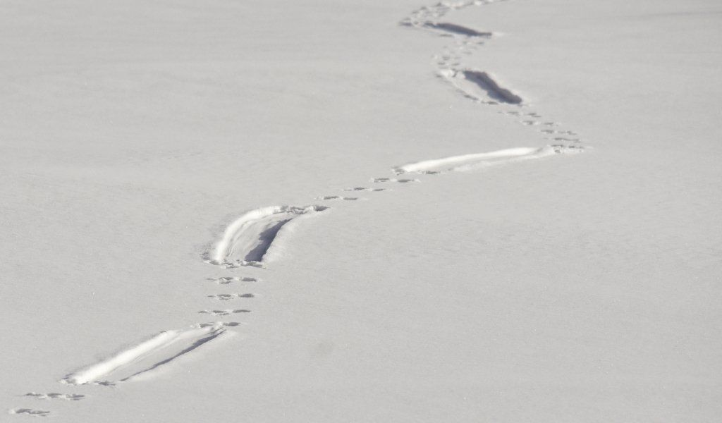 19+ Animal footprints in snow images