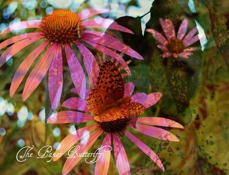 Cone Flower Is A Texas Native  Plant For The World Of Wonder And Harvest
