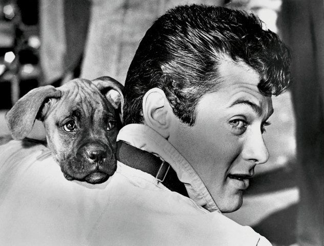 Tony Curtis In His Johnny Dark Costume In Las Vegas In 1953 With A Boxer Puppy That Was Given To Him By A Fan Celebrity Dogs Tony Curtis Boxer Love