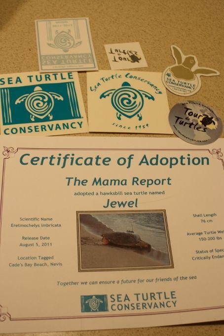 Someone Did A Good Deed Endangered Sea Turtles Sea Turtle