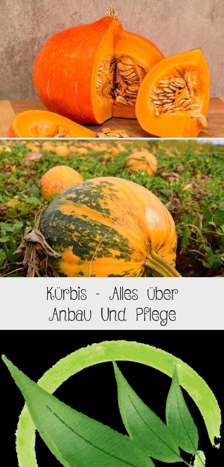 Kurbis Alles Uber Anbau Und Pflege In 2020 Garten Pumpkin Pumpkin Patch