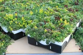 Image result for Extensive roof garden modular system