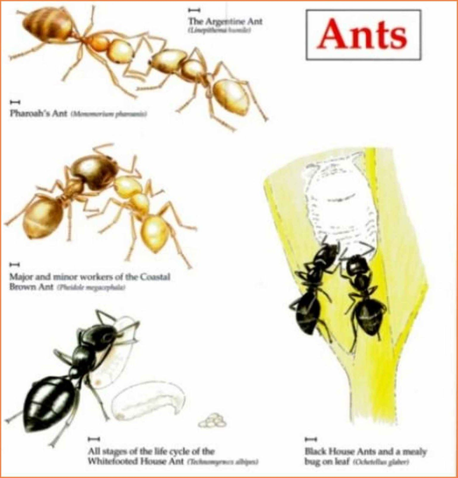 How To Get Rid Of Ants In The Backyard Types of ants