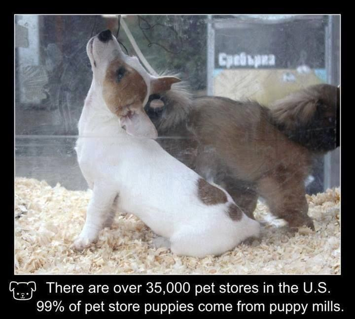 Pet Store Double Speak Despite What They May Tell You Pet Stores
